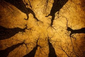 Seven Trees