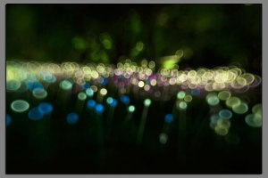 01_Cheekwood_Lights