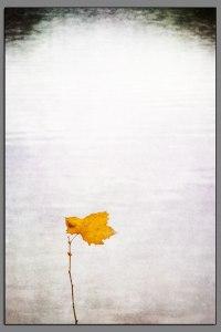 08_Last_Leaf