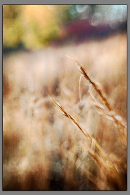 Abstract Grasses 01