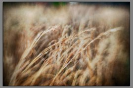 Abstract Grasses 02