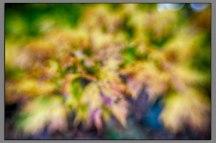 Foliage Stars