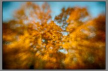 Fall Color Abstract 03