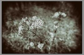 Late Season Flora