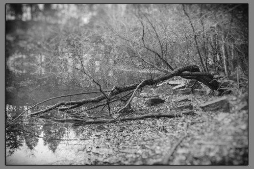 Hidden Lake #03