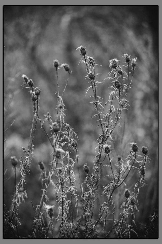 Flora Forgotten