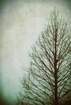 """Kilmer """"I think that I shall never see a poem lovely as a tree.""""  - from Tree"""